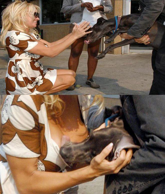 epic-galerie-xx-animaux-qui-ne-comprennent-pas-le-signification-du-harcelement-sexuel-7-L