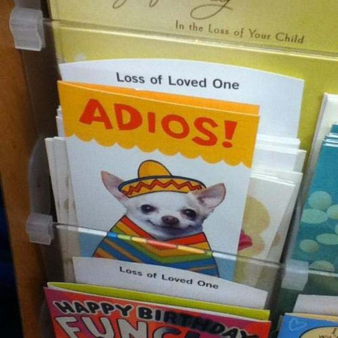 funniest-pictures-2013-adios-L