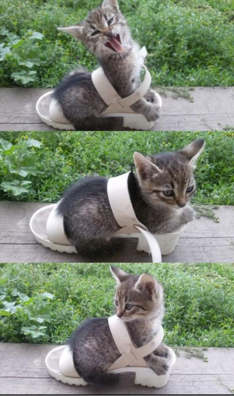 cat4-L