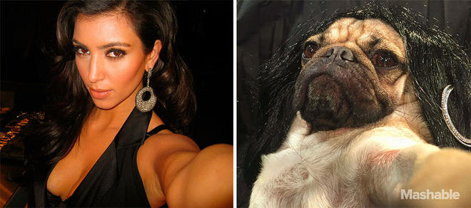 doug-the-pug-recreates-kim-kardashian-selfies-3-L