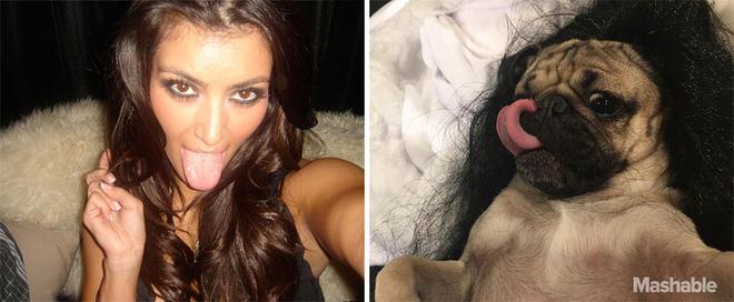 doug-the-pug-recreates-kim-kardashian-selfies-4-L