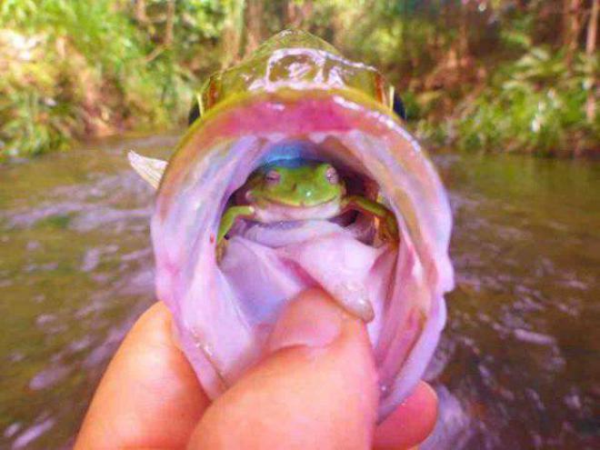 fish1-L