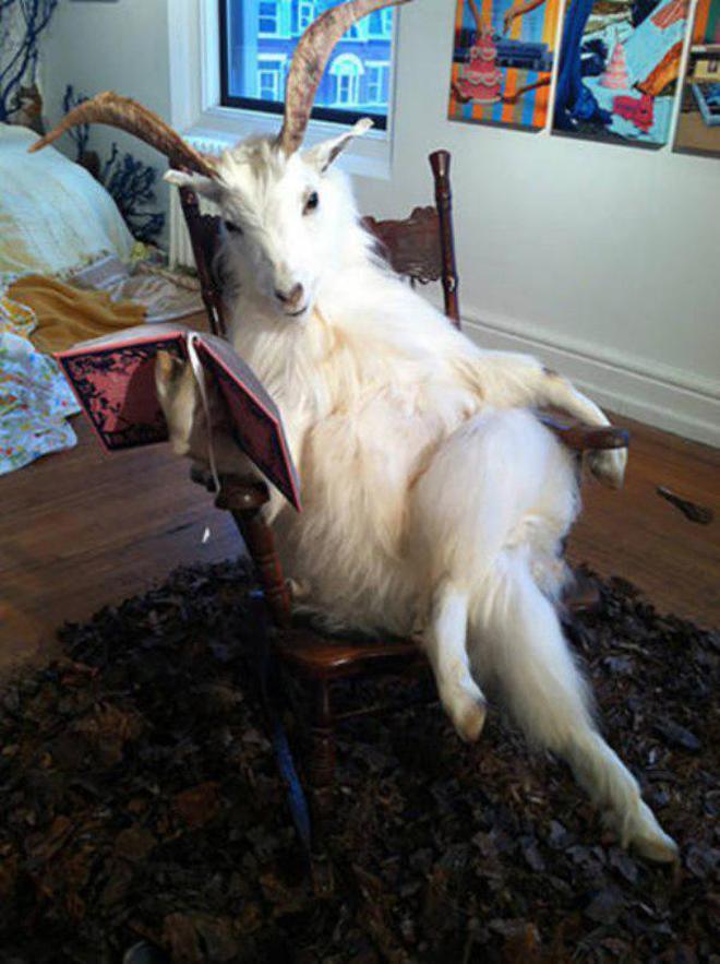 goat-L