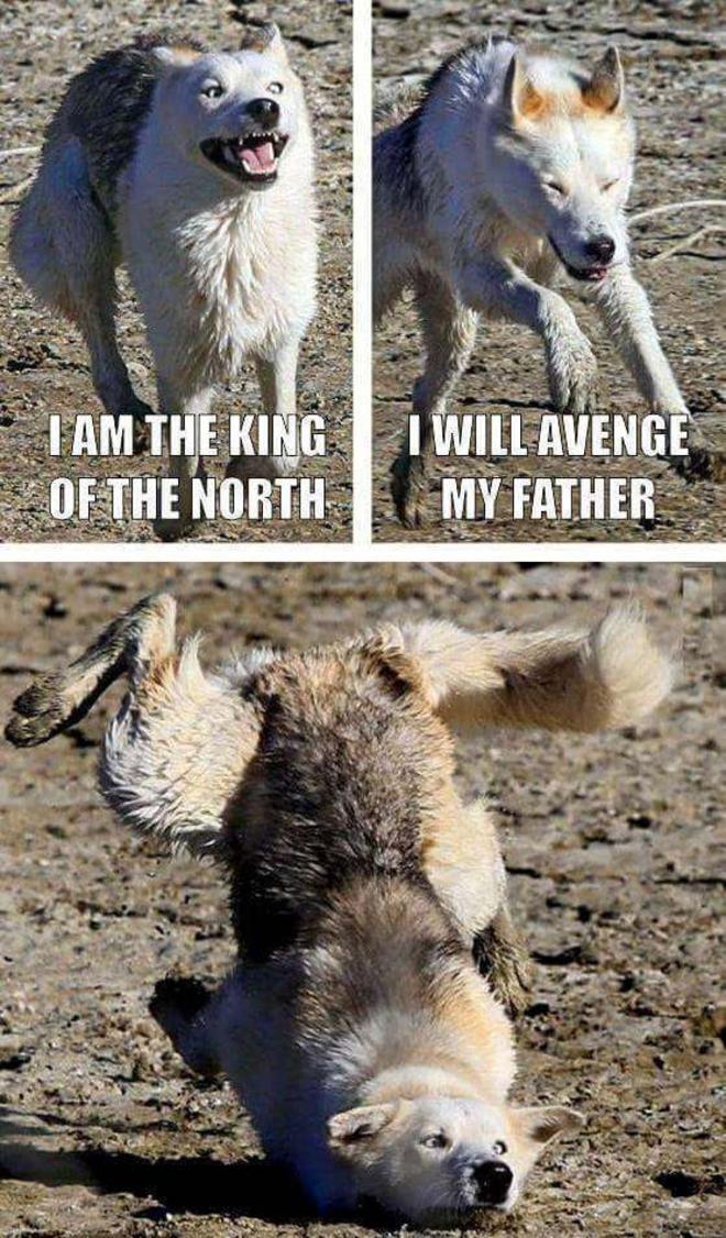 got-wolf-fail-L