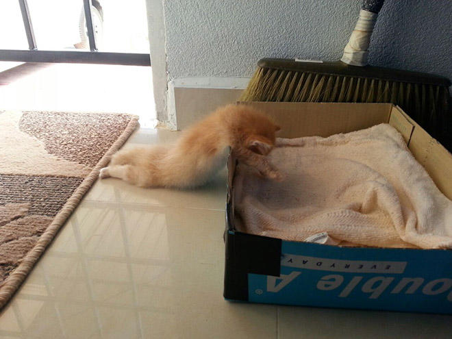 sleepy1-L