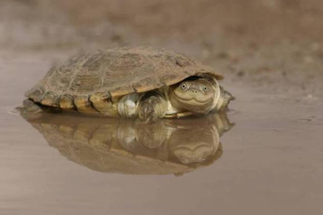 turtle3-L