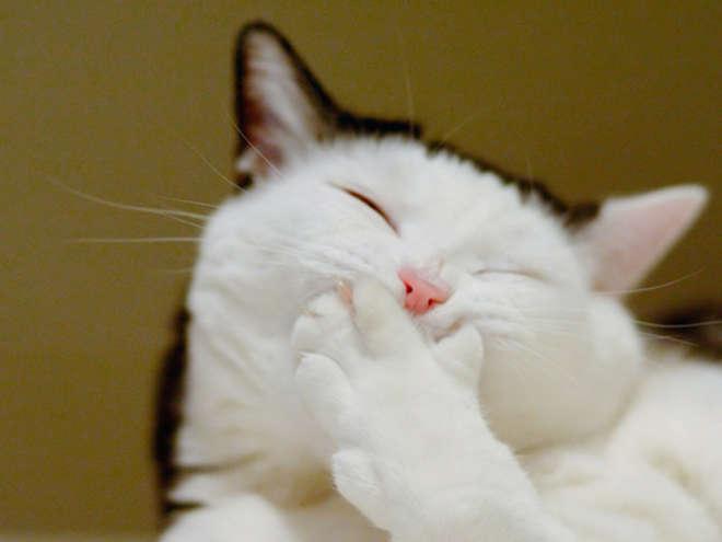 XX-Smiling-Cats-4__605-L.jpg