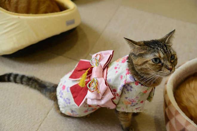 kimono-1-L.jpg