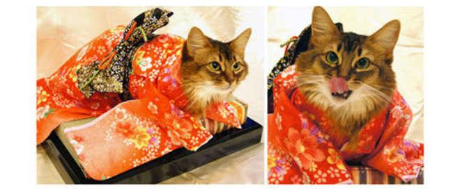 kimono-11-L.jpg