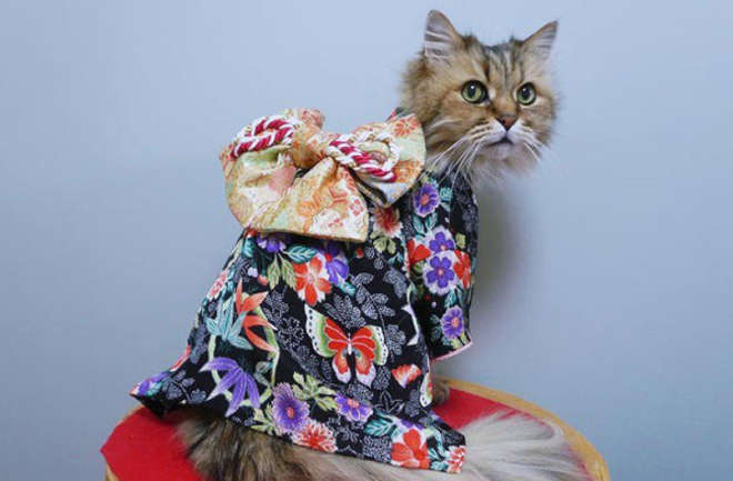kimono-2-L.jpg