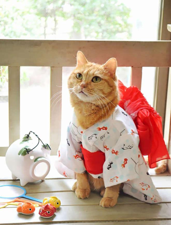 kimono-9-L.jpg