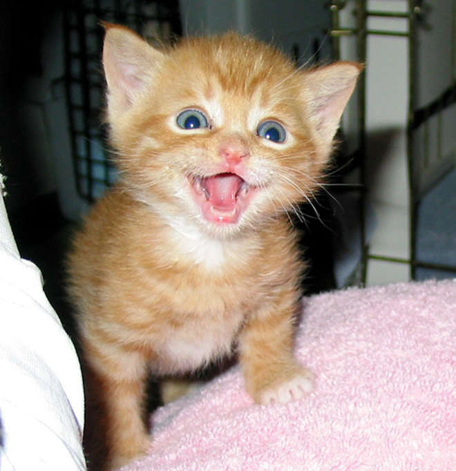 smiling-cat-19__605-L.jpg