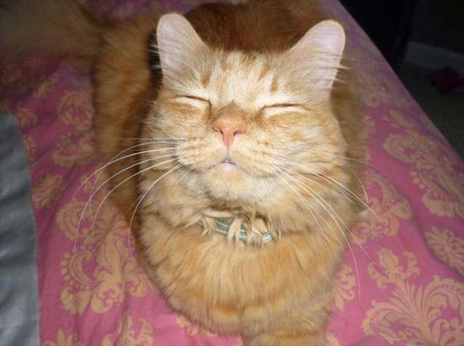 smiling-cat-1__605-L.jpg