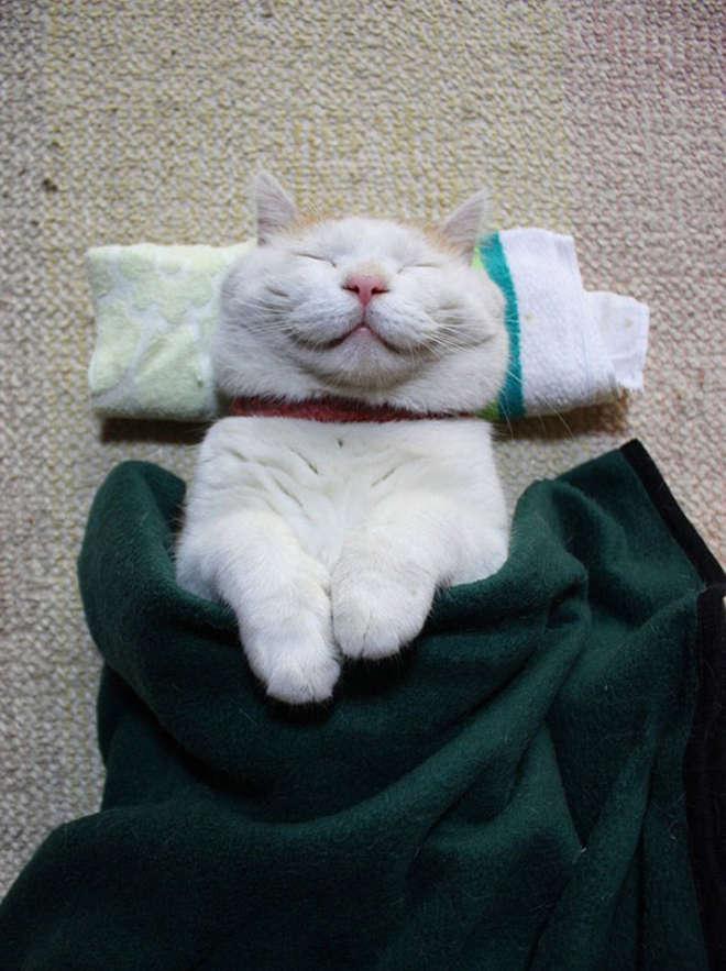 smiling-cat-31__605-L.jpg