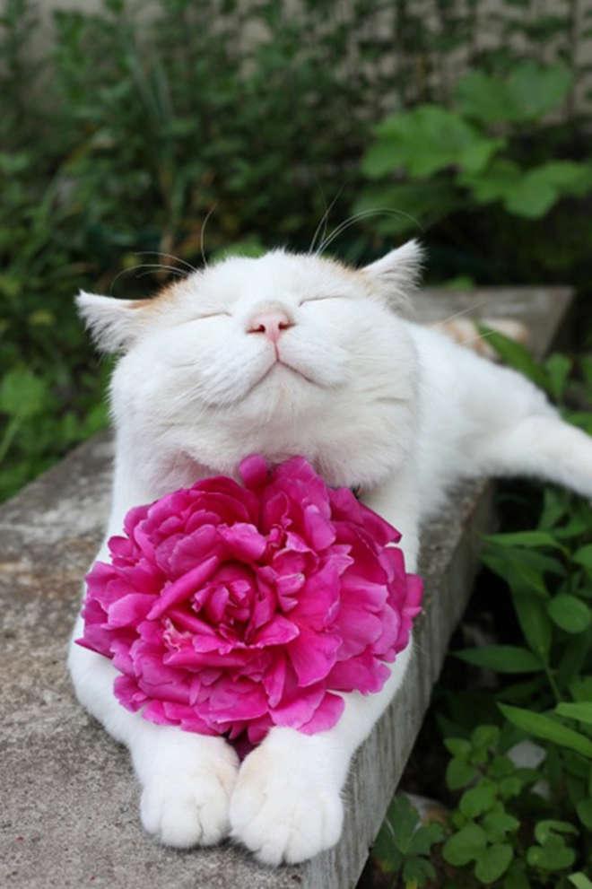 smiling-cat-32__605-L.jpg