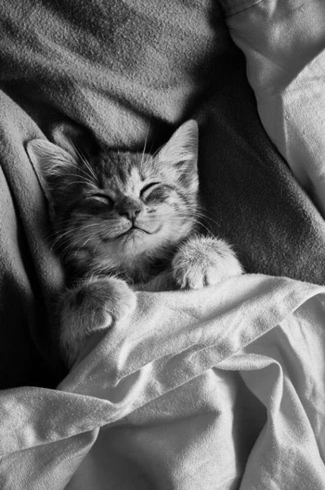 smiling-cat-funny-21__605-L.jpg