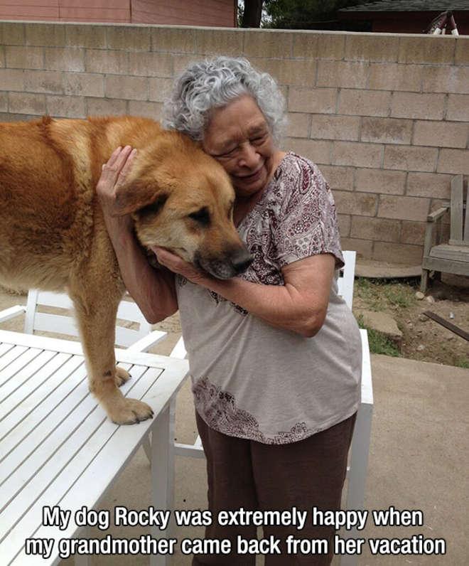 chiens-meilleurs-amis-de-l-homme-1-L.jpg