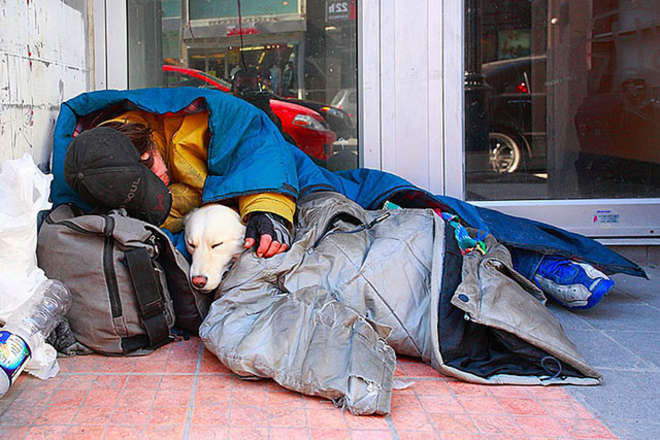chiens-meilleurs-amis-de-l-homme-12-L.jpg