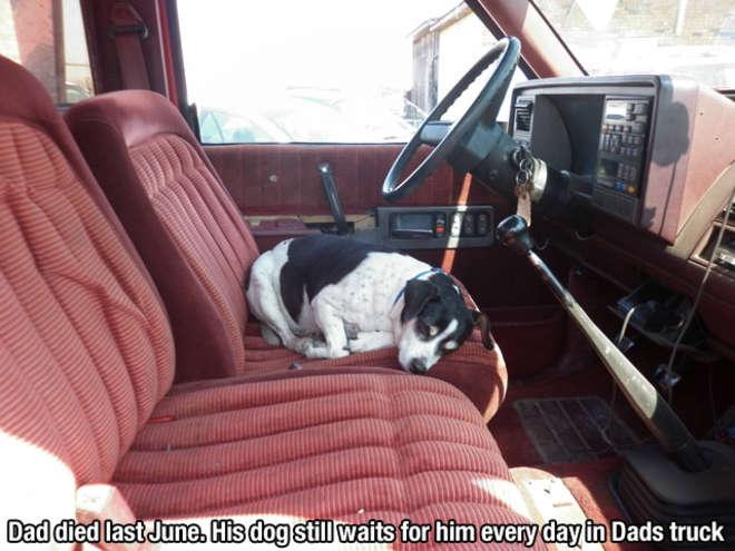 chiens-meilleurs-amis-de-l-homme-17-L.jpg
