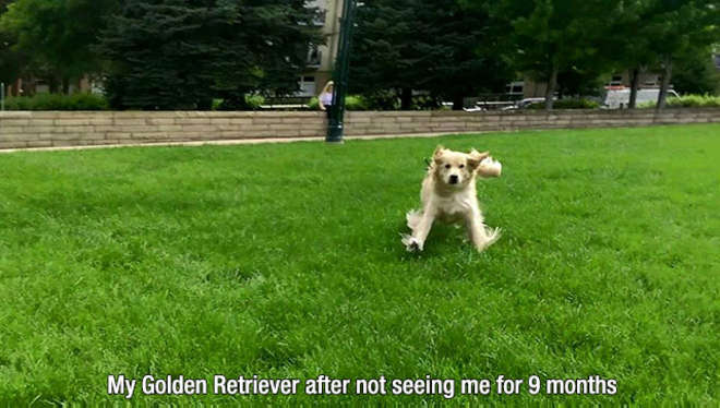 chiens-meilleurs-amis-de-l-homme-23-L.jpg