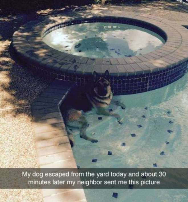 chiens-meilleurs-amis-de-l-homme-6-L.jpg