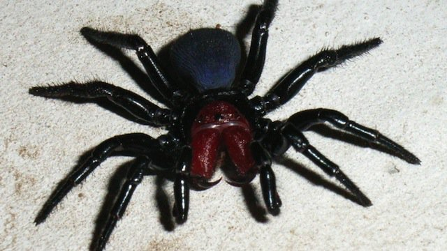 1-Mouse-Spiders-copy