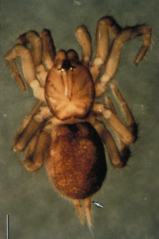 22-spruce_fir_moss_spider_large