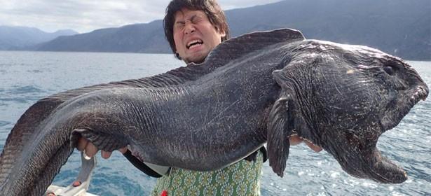 poisson-loup-japon