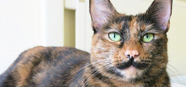 zoe-chat-moustache