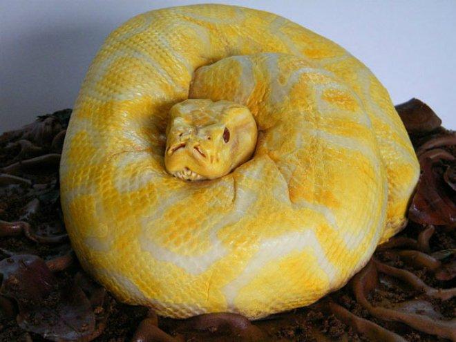 cake snake 660