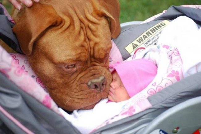 Chien-avec-bebe