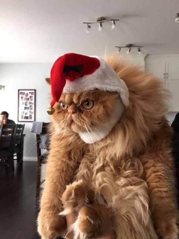 Merry-go-Fuck-yourself