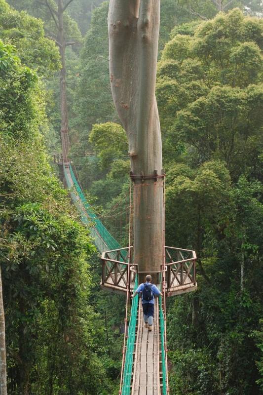 Pont-suspendu-sur-un-arbre
