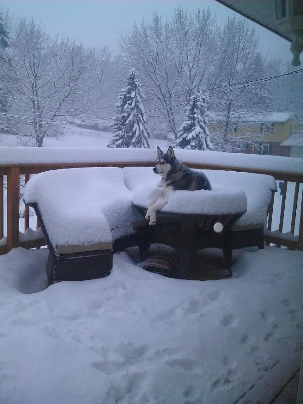 Chien-sous-la-neige