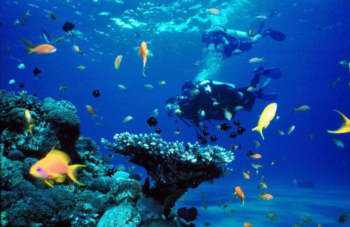 Tubbataha.Reefs.Natural.Park.original.2391