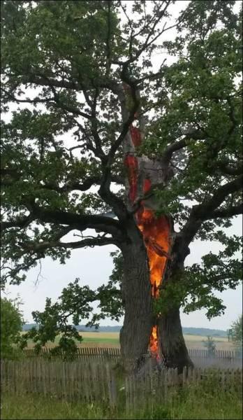 arbre-en-feu