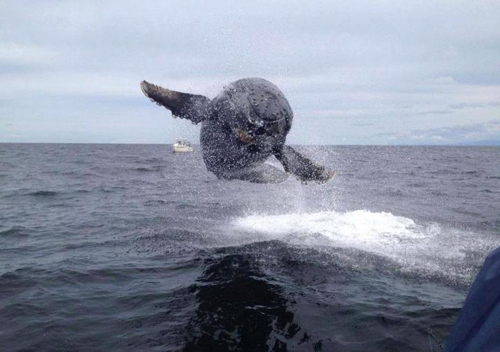 baleine-volante-720x507