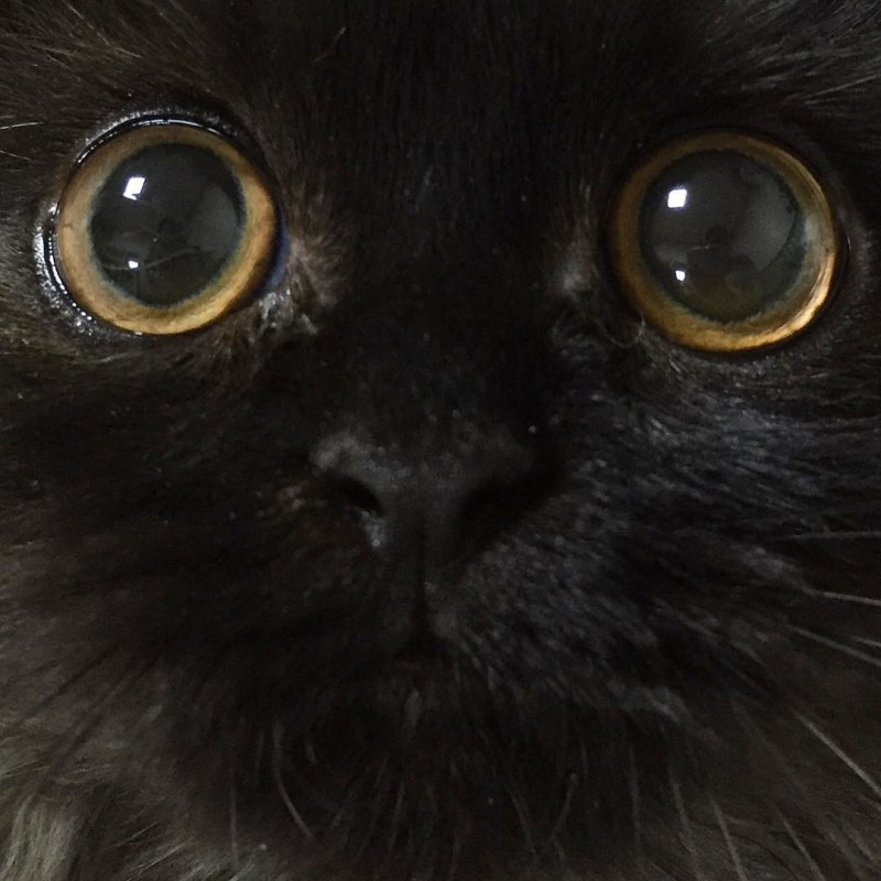 chat-gimi-yeux-13