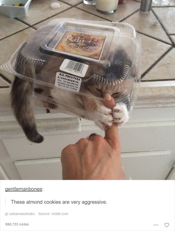 funny-tumblr-cats-17-5811ce7ac0676__700