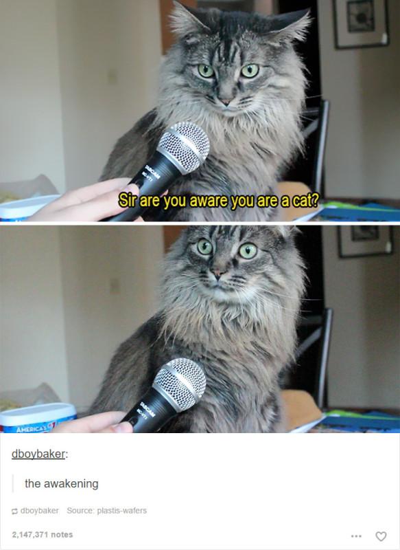funny-tumblr-cats-25-5811ce8f913ad__700