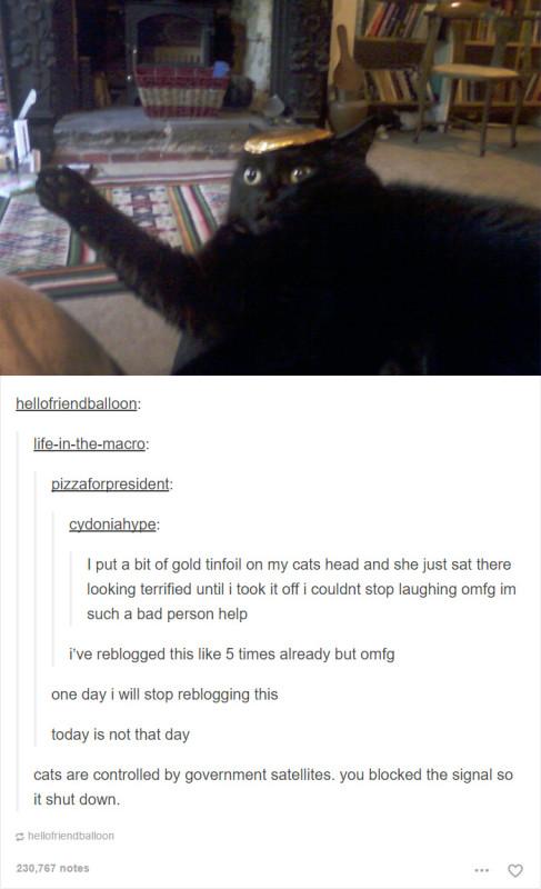 funny-tumblr-cats-31-5811cea03f61b__700