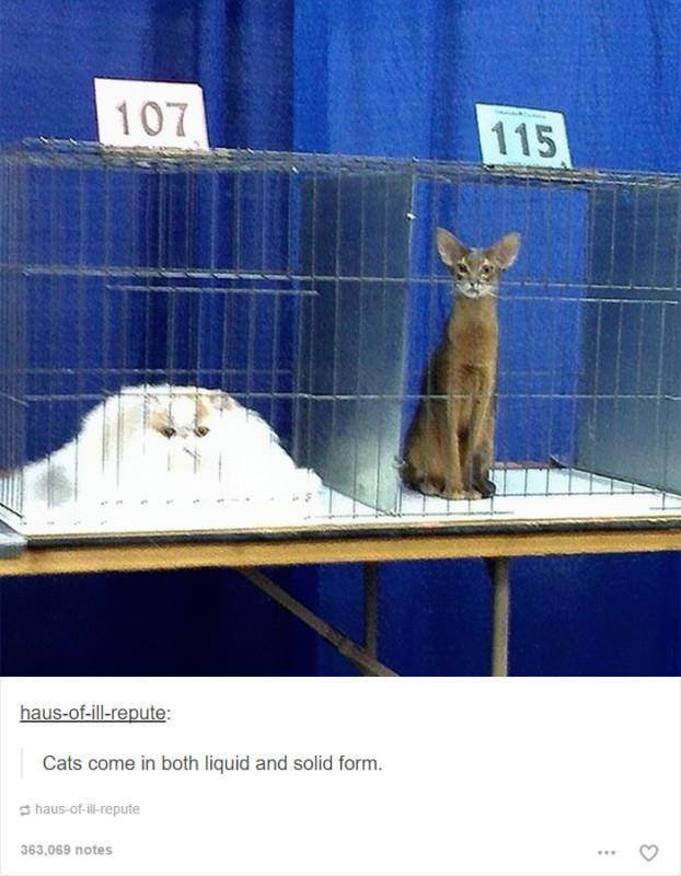 funny-tumblr-cats-35-5811ceaba5f2e__700