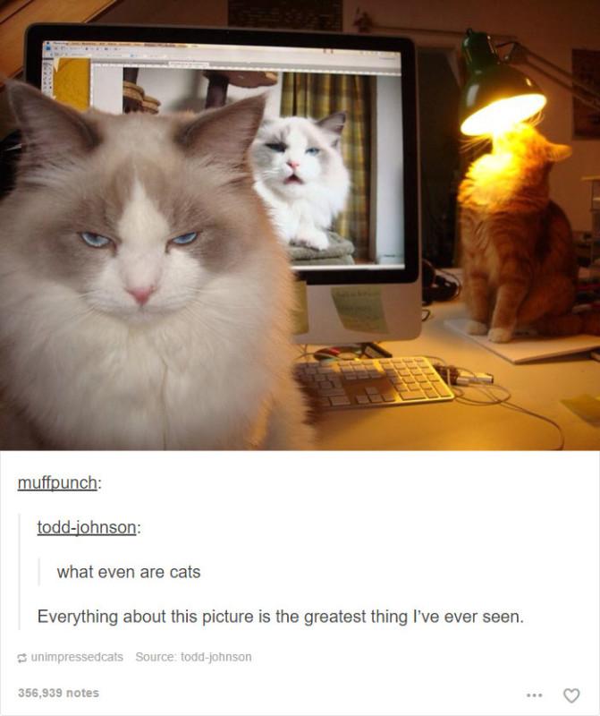 funny-tumblr-cats-37-5811ceb0dc575__700