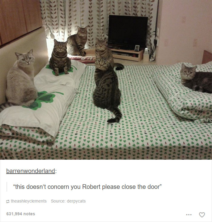 funny-tumblr-cats-50-5811ced268163__700