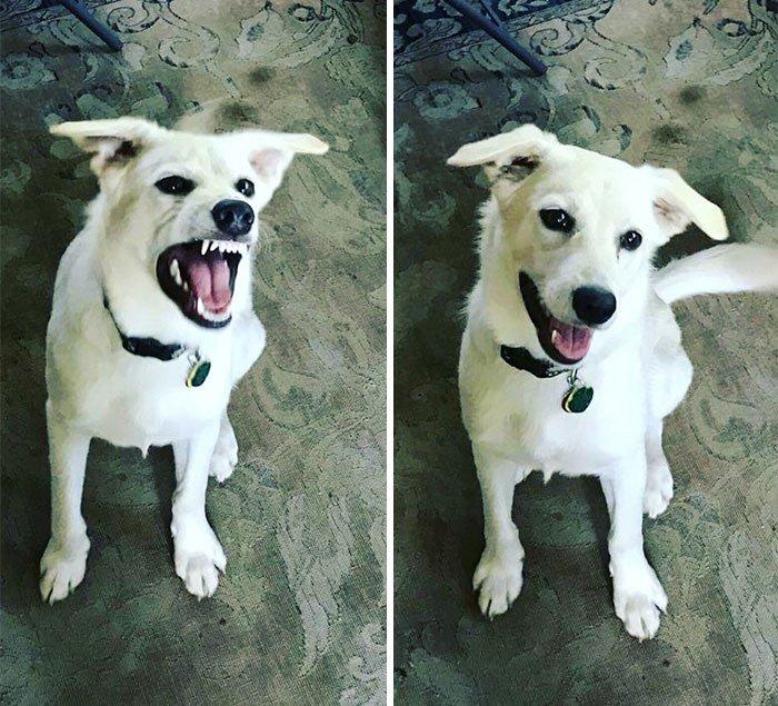 6 CanineHelpYou