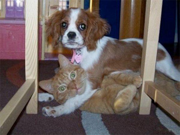 guilty-animals-caught-0-Copie
