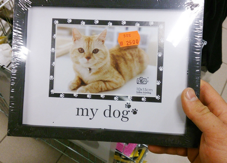 mon-chien1485793387