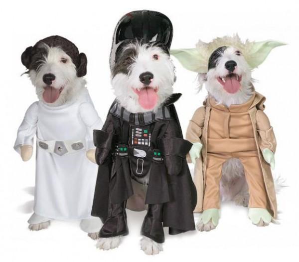 costume-chien-600x525