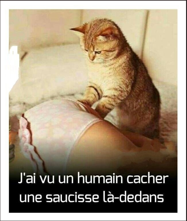 Image Drole Du Jour J Ai Vu Un Humain Breakforbuzz
