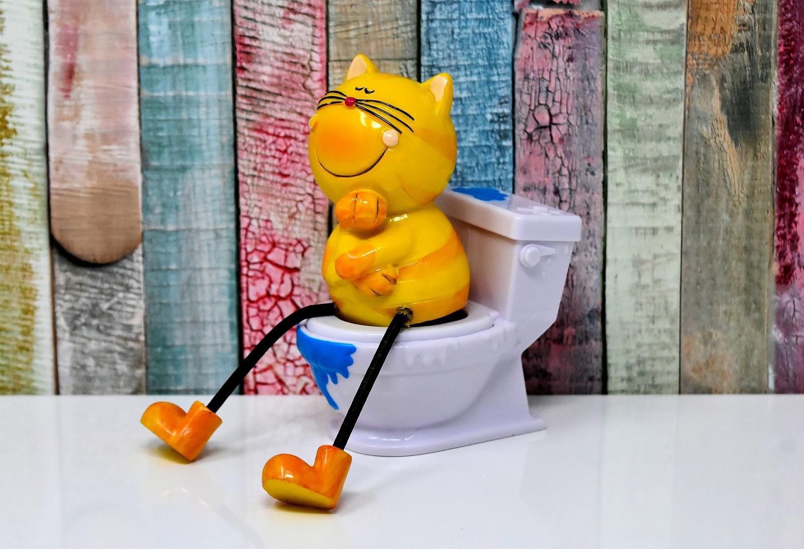 apprenez à votre chat à aller aux toilettes